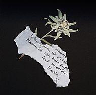 'edelweiss'