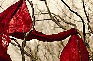 'Red scarf' Kyla Orr