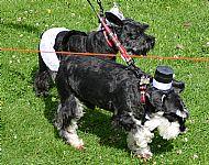 Mr & Mrs Canine
