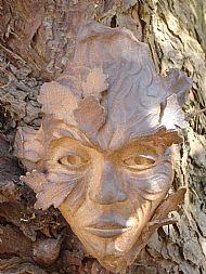 spirit of oak