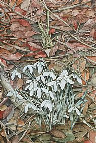 Snowdrops on the Gyre Road, Orphir