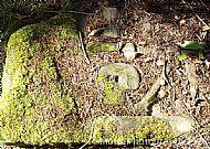 Littered Skull