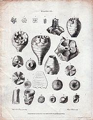 Print 11