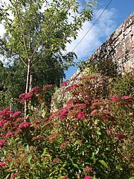 lydia garden