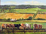 Banffshire cattle