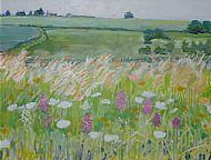Orchids in meadow Dordogne