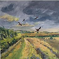 Red Kites over Cross Lane Aldwincle