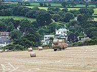 Hay Making