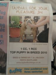 OUR DOGS TOP PUPPY IN BREED 2010