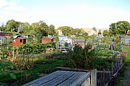 The Allotments Oct 2013