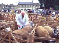 Masham Sheep Fair 2007