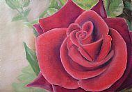 Rose. Pastels.