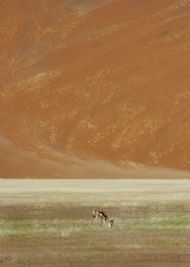 Springbok, Sossusvlei