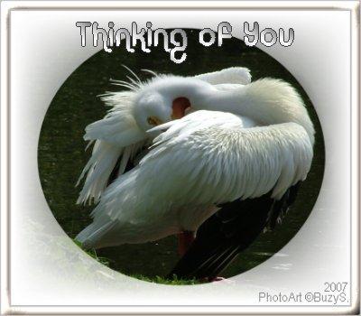 my favourite pelican