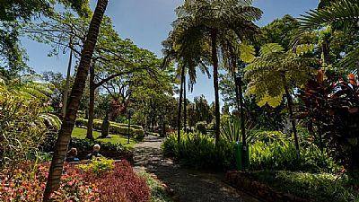 apartment arriaga, funchal, garden view