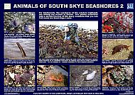 SLEAT SEASHORE ANIMALS 2