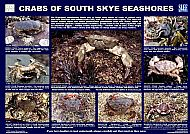 CRABS OF SOUTH SKYE SEASHORES