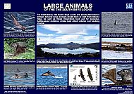 LARGE ANIMALS OF THE SOUTH SKYE LOCHS