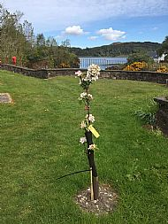 plockton apple tree