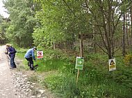 Contin Forest Walk