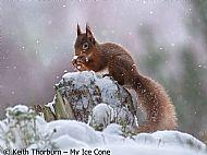 My Ice Cone