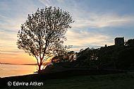 Tree lined battlements