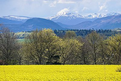 field of oilseed rape with hills in the background