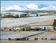 Winter on Black Isle