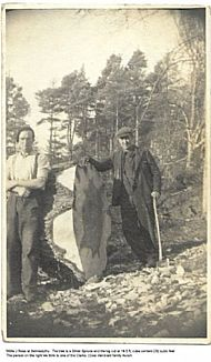 Willie J Ross at Belmaduthy. The tree is a Silver Spruce and the log cut at 18.5 ft cube content 232 cubic feet. The person on the right is thought to be one of the Clarks (Coal merchant family Avoch)