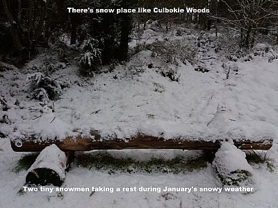 snow in culbokie woods