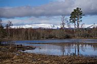 View across Culbokie Loch