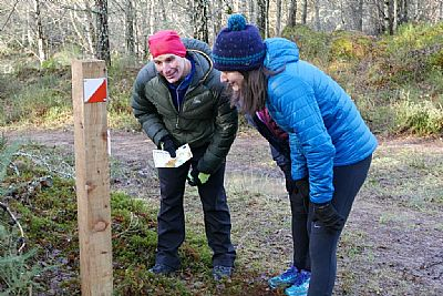 orienteering in culbokie wood