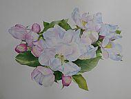 Bramley Blossom
