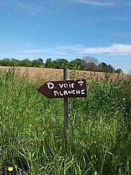 Visit an Organic Vineyard