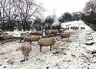 Rutland in Winter