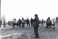 HPA267   Sanday Show, 1980 (Stuart Christie)