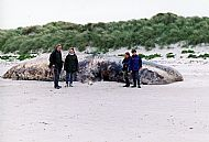 HPA791   Beached Whale, Rusness