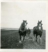 HPA062   Geordo Brown ploughing