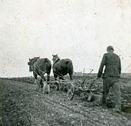HPA082   Geordo Brown, ploughing 1950
