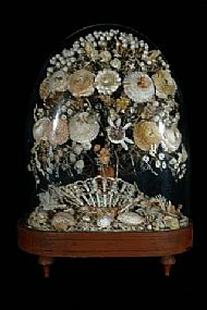 Sea Shell Display