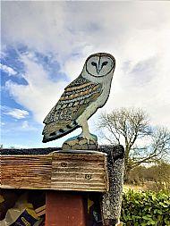 Large Barn Owl