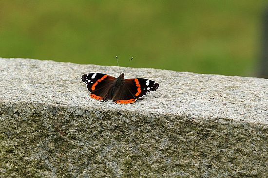 picture of a butterfly on a gravestone