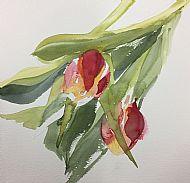 Tulip Study 2
