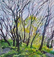 Crinan Woods