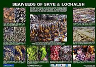 SOUTH SKYE LOCHS SEAWEEDS