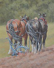 Breezy Work - Shire Horses