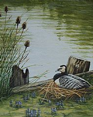 Lakeside Nest - barnacle goose