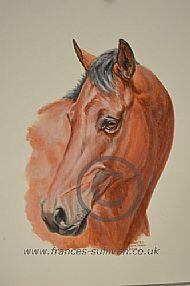Sport Horse portrait