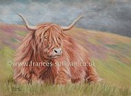 Rain on the Way - highland cattle