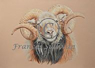 Regal Ronaldsay - North Ronalsay ram SOLD